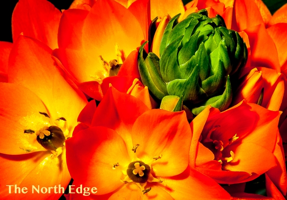 green-orange-yellow-2056-jpgblog